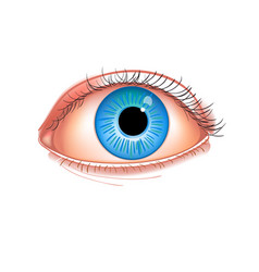 realistic human eye close-up human eye blue vector image