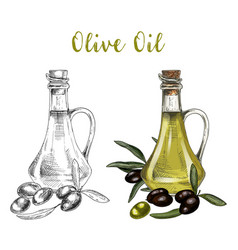 sketch of bottle with olive oil and branch vector image