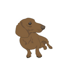 a dachshund that sits colored vector image