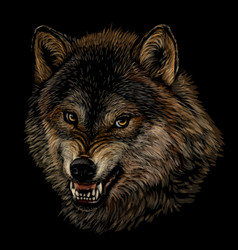 angry wolf graphic color portrait a wolf vector image