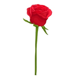 Beautiful red rose with long stem isolated on whit vector
