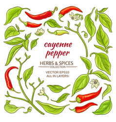 Cayenne pepper elements set vector