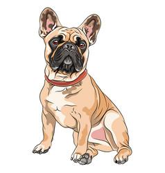 Fawn dog french bulldog vector