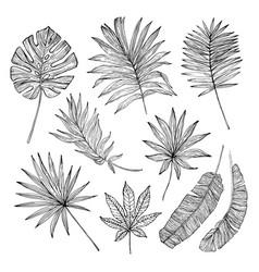 Grunge tropical leaf silhouette elements set vector