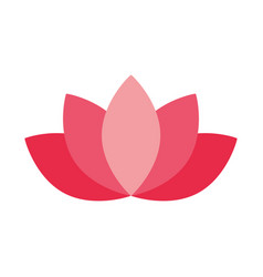 lotus flower decoration on white background vector image