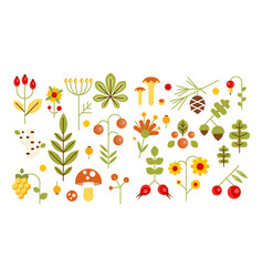 Wild leaves berries and mushrooms set forest vector