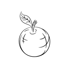 Hand drawn apple sketches vector image