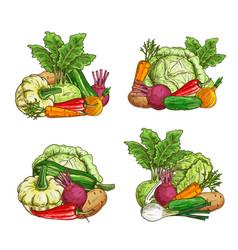 ripe vegetable greenery food sketch banner vector image