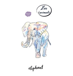 watercolor african elephant vector image