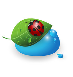 Ladybird on a green leaf and a drop of water vector