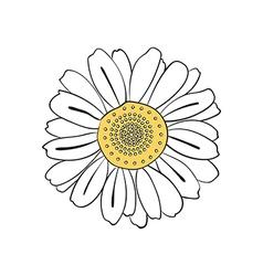 hand drawn daisy vector image vector image