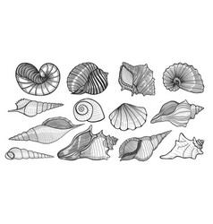 Beautiful mollusk sea shells vector