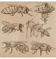 Bees beekeeping and honey - hand drawn pack 3 vector