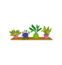 Flat set of 4 houseplants in colorful vector