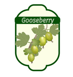 gooseberry label vector image