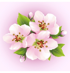 Japanese cherry tree blossoming branch of sakura vector