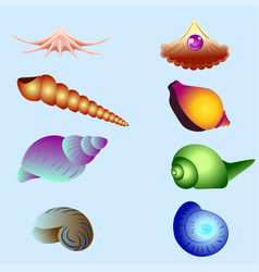 set of sea shells isolated vector image