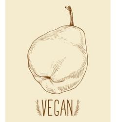 Pear fruit - vintage vector image