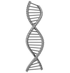 dna molecule picture vector image