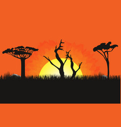 african landscape with trees and sun sunset on vector image