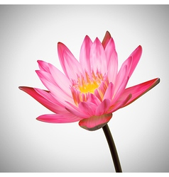 Beautiful flower bloom water lily background vector
