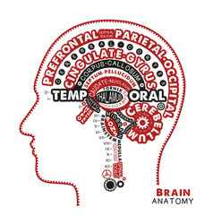 brain anatomy typographic artwork inspirational vector image