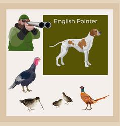 hunting gun dog vector image
