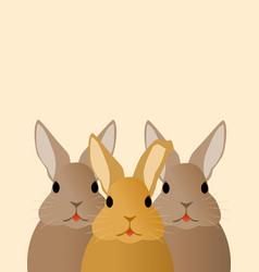 three rabbits looking at you vector image