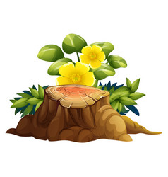 Yellow flowers and stump on white background vector