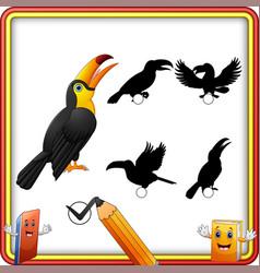 Find the correct shadow funny toucan bird educati vector