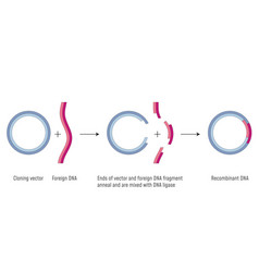 Gene cloning plasmids and recombinant dna vector