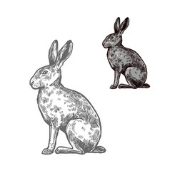 hare or rabbit animal sketch for nature design vector image