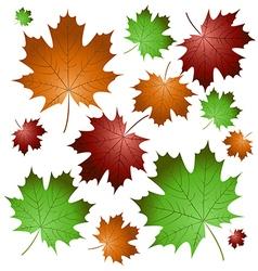 Maple leaves5 vector