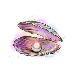 opened shell with pearl inside from a splash of vector image