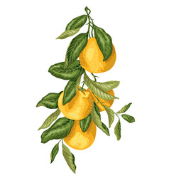 vertical branch with orange fruits made in vector image