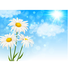 white daisy flowers and clouds vector image