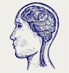 Human brain and head vector image vector image