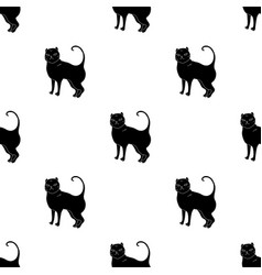 British shorthair icon in black style isolated on vector
