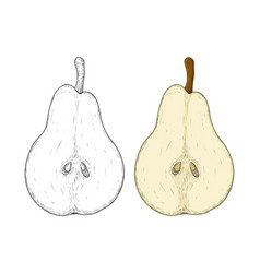 half of pear colored and black and white hand vector image