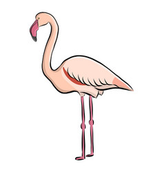 Hand drawn bird flamingo vector