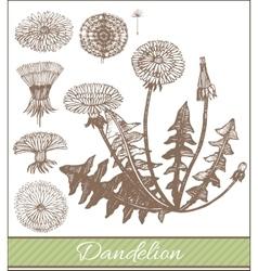 Hand drawn dandelion vector