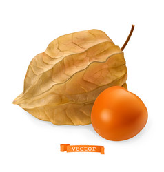 physalis fruit with husk 3d realistic icon vector image