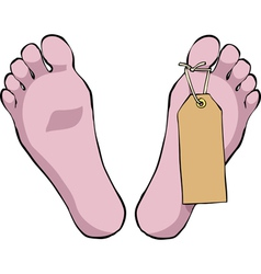 Toe tag vector