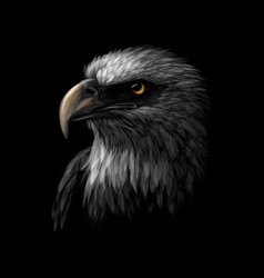 portrait of a head of a bald eagle on a black vector image