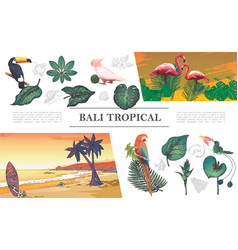 sketch tropical elements composition vector image
