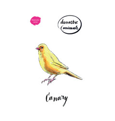 Watercolor yellow canary bird vector