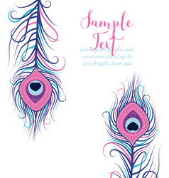Colorful peacock feathers vector