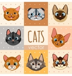 Set of eight colorful cartoon cat faces vector image