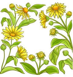 Arnica plant frame on white background vector