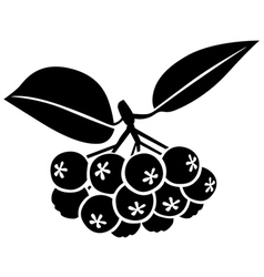 chokeberry vector image